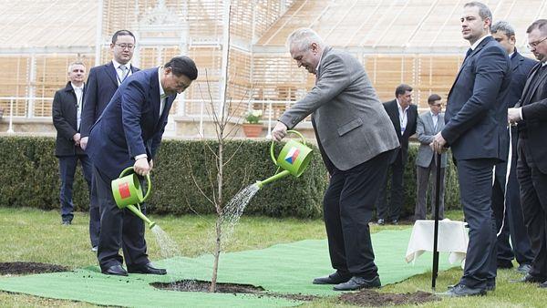 Prezidenti Zeman (ČR) a Ši (Čína) společně zalévají strom přátelství... (archivní fotografie)